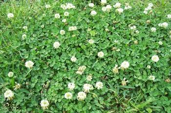 Spring_087