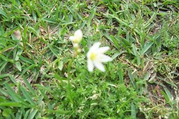 Spring_092