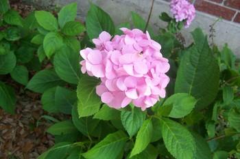 Spring_2007_003_2