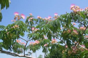 Spring_2007_006