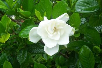 Spring_2007_027