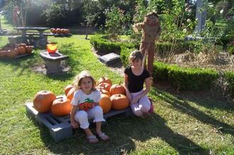 Pumpkin_patch_002