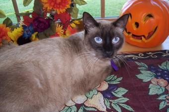 Autumn_2007_011