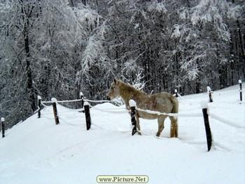 Snowhorse_1